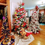 A feat of community creativity and involvement, the Festival of Trees leaves all four floors of the  Victorian home that houses the  decorated trees for the holidays.